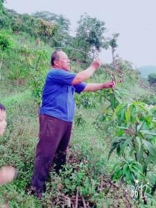 vuvu教導我們當被蟲咬的時候就要把一些樹枝折斷~ 否則會影響到芒果的生長