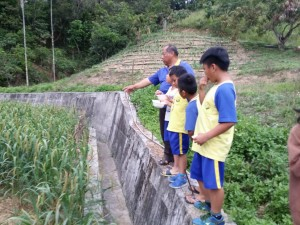 vuvu與我們分享了小米生長過程~