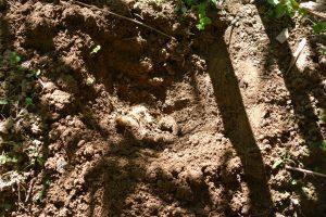 口埤部落的綠竹筍