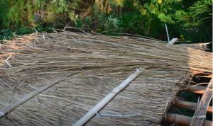 西拉雅男人蓋茅草屋