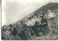 新化鎮上的蔗田
