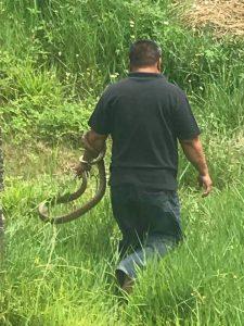 西拉雅勇士與蛇